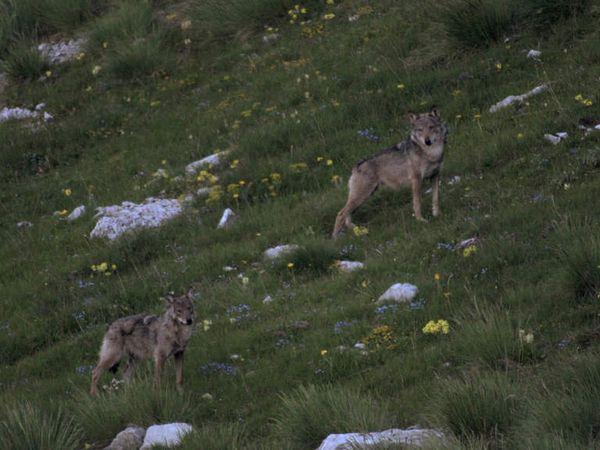 La vallée des loups, le film