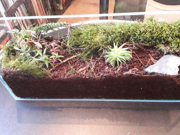 Conception d'un petit terrarium pour mes Diacamma.
