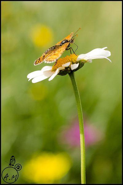 Papillon fleuri