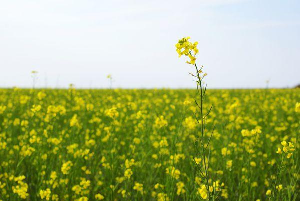 La nouvelle politique agricole européenne sera-t-elle plus verte et plus juste?