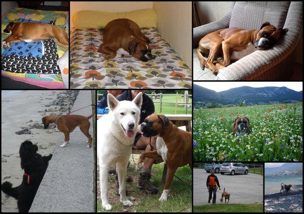 Deux ans... Pas tous les jours faciles, la vie de chien...