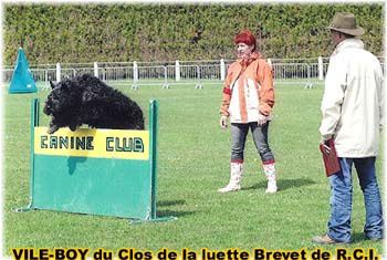CLUB  BOUVIER DES FLANDRES -  and Co