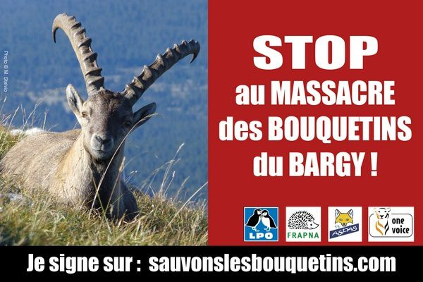 Tous à Annecy le 14 avril (16H30) pour dire stop aux abattages des bouquetins sains