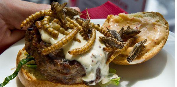 Un hamburger de vers et sauterelles présenté en juin 2014 dans un restaurant de Washington. (Karen BLEIER/AFP PHOTO)