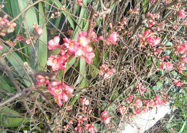 des fleurs en janvier février