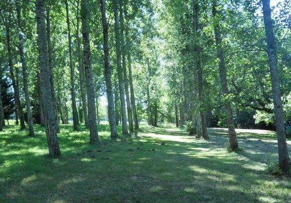 des arbres pour Khanel