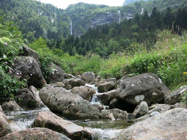 Biodiversité continentale : rivières et forêts