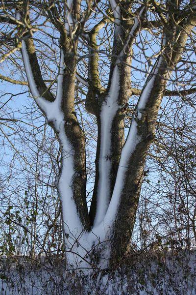 Paysages ardennais sous la neige