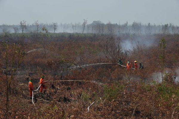 En septembro 2015, Indonezio frontis gravajn incendiojn en siaj arbaroj de palmoleo. PHOTO / ROMEO GACAD / AFP