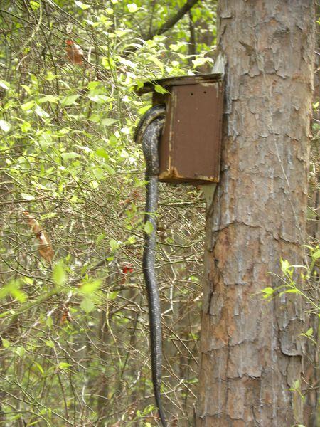 Promenons-nous dans les bois... avec Mike II