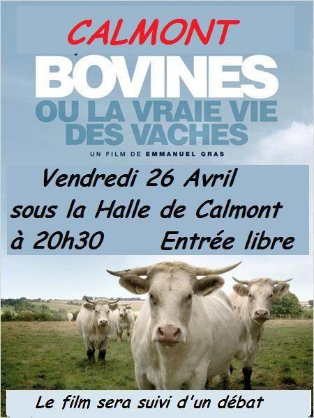 Vendredi 26, à Calmont,film &quot&#x3B;Bovines&quot&#x3B;