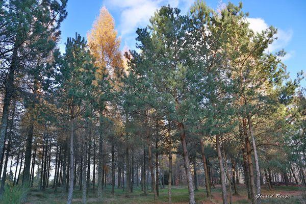 L'automne au grand Wintersberg (581m)