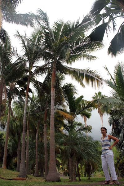 Conservatoire botanique...un endroit austère et barbant ? Pas à La Réunion !