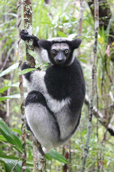 Chroniques malgaches (13) : Safari sur le canal des Pangalanes