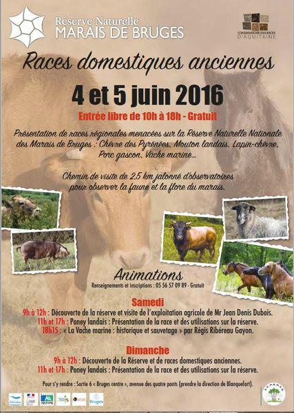 Découvrir  «Les races anciennes régionales» à la Réserve Naturelle Nationale des Marais de Bruges  4 et 5 juin gratuite mais s'inscrire!