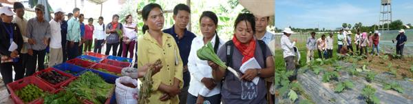Voyage d'études à Svay Rieng pour les leaders paysans