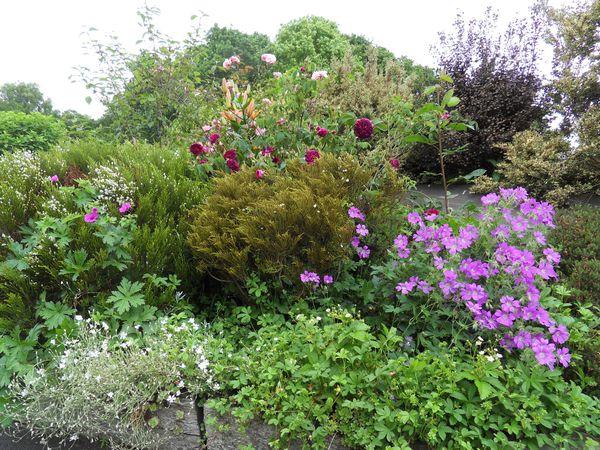 le jardin après la pluie !!!!