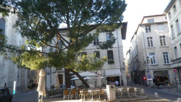 Sauver les pins de la place Saint Didier