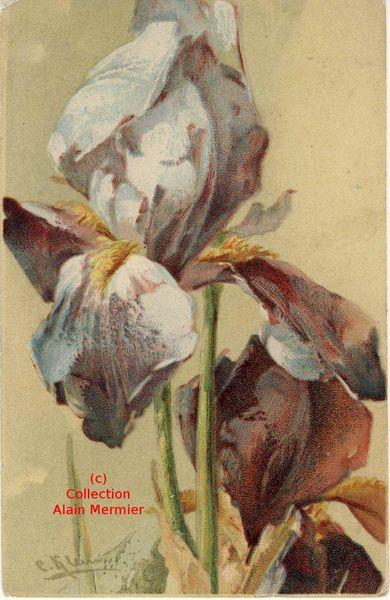 Iris -2309- Illustratrice KLEIN Catherine.