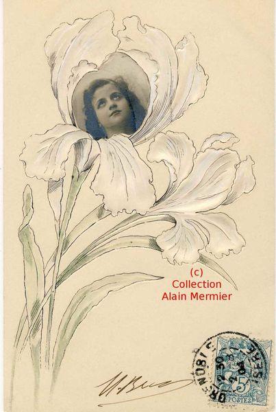 Iris -2294- Face dans un iris blanc. France. 1904.