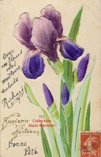 Iris -3535- Peinte main + ajoutis fleur aspect soie. Souvenir affectueux. France. Vers 1910.