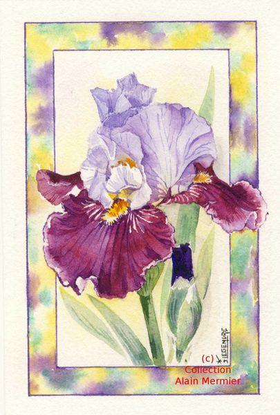 Iris -3624- Aquarelle originale de Jacqueline LEGENDRE. 2015.