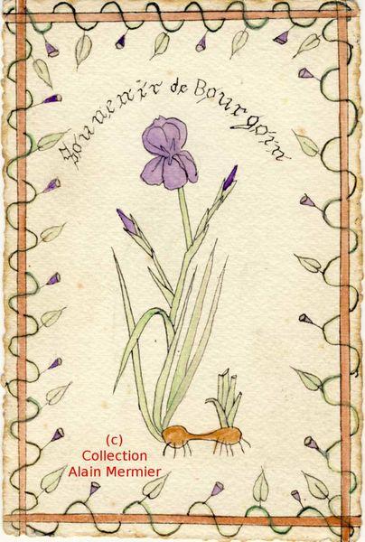 Iris -3640- Peinte main. Souvenir de Bourgoin (Isère). France. 1913.