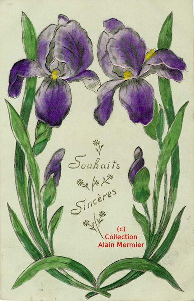 Iris - 3647- Souhaits sincères. France. 1911.
