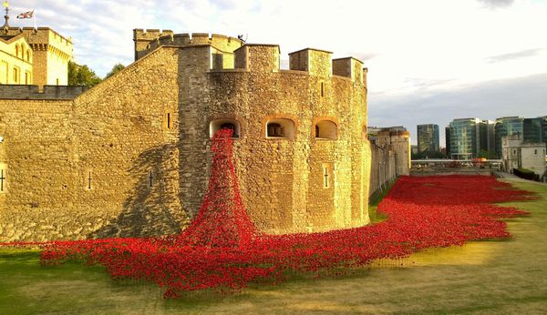 Les coquelicots de la Tour de Londres! / The Tower of London Poppies!