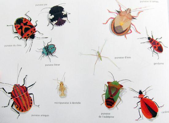 La toile. Texte et illustrations d'Isabelle SIMLER. (Dès 3 ans)