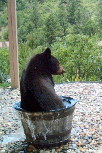 Et la l'ours lui dit...