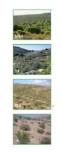 La végétation des zones arides et semi-arides  pourrait bien résister au changement climatique