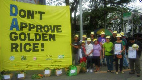 Riz doré : Greenpeace accusée par les Nobel ? Stéphane Foucart prononce un non-lieu !