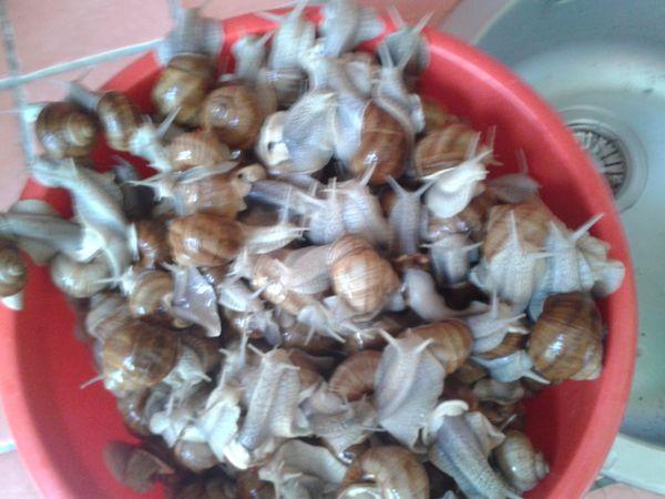 recette des escargots