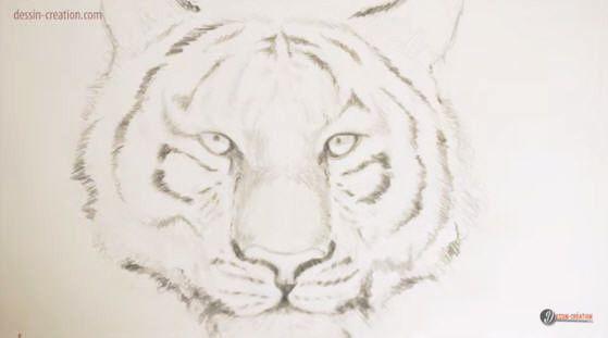 Dessiner une t te de tigre facilement ressources du congo - Apprendre a dessiner un tigre ...