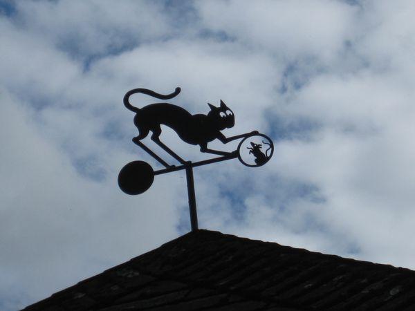 jouer au chat et à la souris