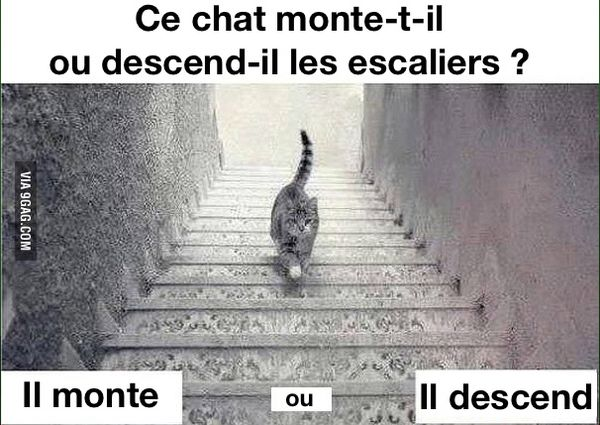 ce chat monte t il ou descend il les escaliers la photo qui enflame le web toute l 39 actualit. Black Bedroom Furniture Sets. Home Design Ideas