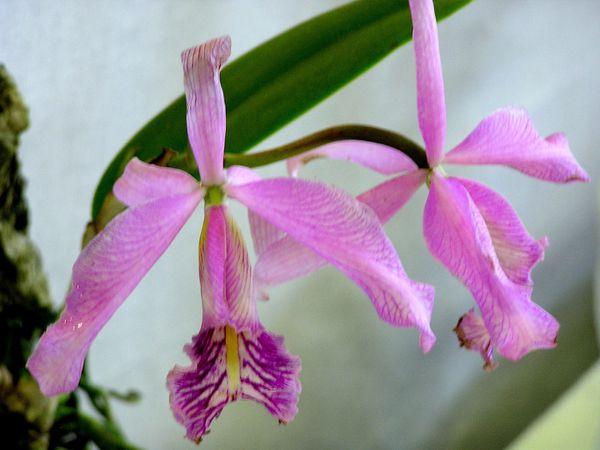 Les exigences des orchidées : petites graines d'astuce
