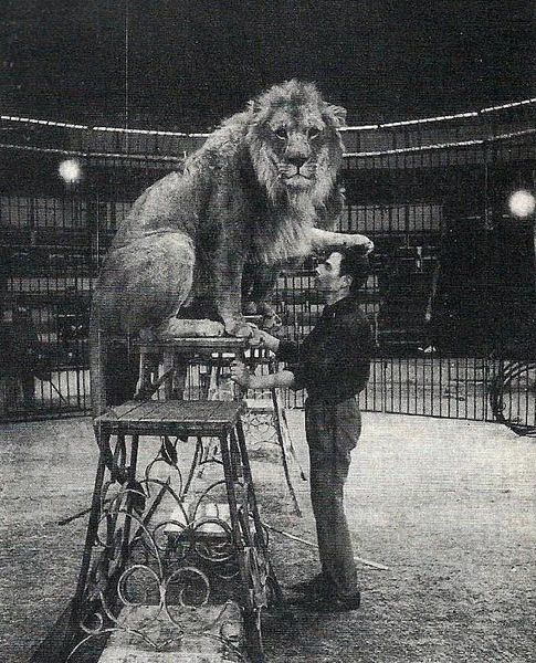 Pierre Thomas (1939-2002), l'homme qui murmurait à l'oreille des animaux