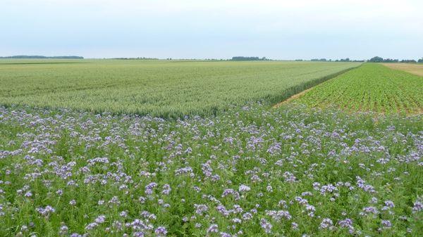 L'avenir inquiétant de notre production agricole