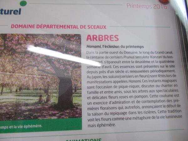 Une image par jour : les cerisiers japonais du parc de Sceaux