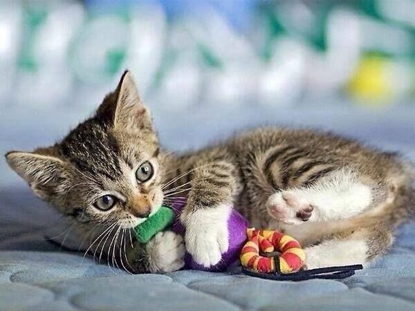Le chat et la dépression