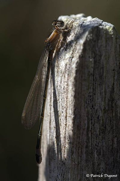 Insectes, arachnide et reptile