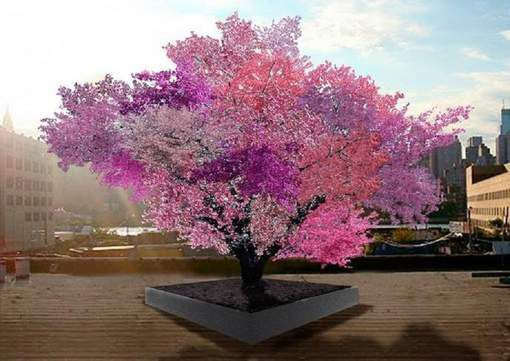"Voici l'arbre ""magique"" capable de produire 40 fruits"