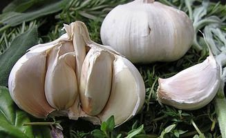 Allium sativum L.  - Ajo