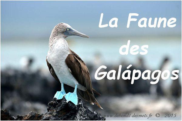 La Faune des îles Galápagos