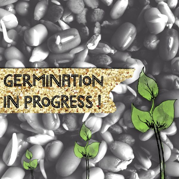 Germination - J'en ai pris de la graine !!