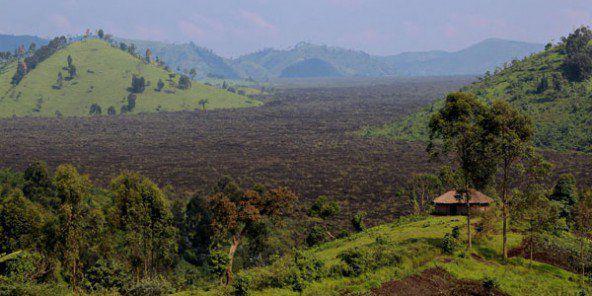 Une forêt en RDC