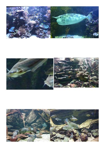 Aquarium tropical de la porte dor e le blog de maman nounou - Aquarium tropical de la porte doree ...