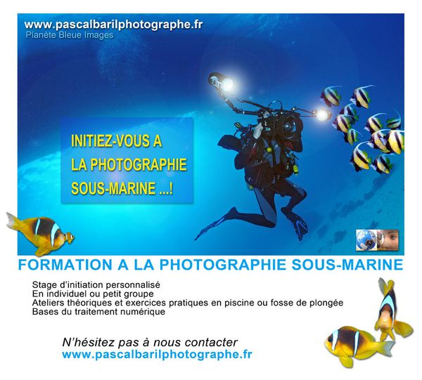 Formation à la Photo Sous-Marine...